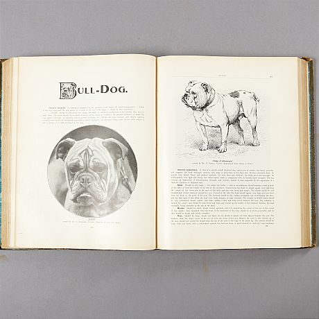 Large dictionary on dogs