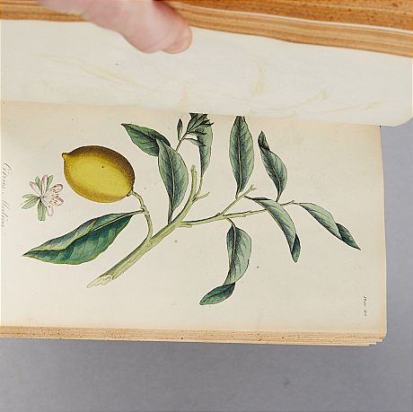Medical Botany 1821-22 with plates